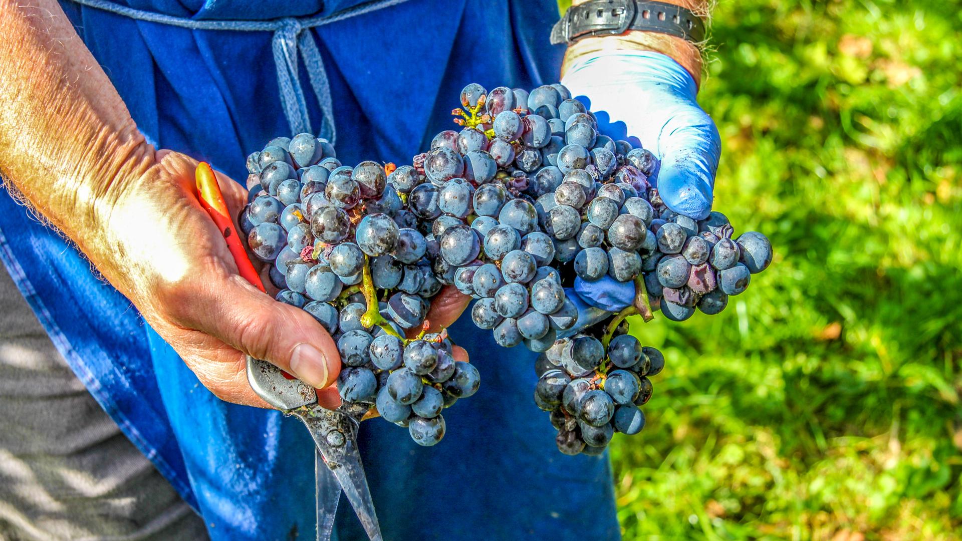 Weinguts Webseiten mit Shop erweitern die Möglichkeiten für Winzerinnen und Winzer, aber auch für Kunden.